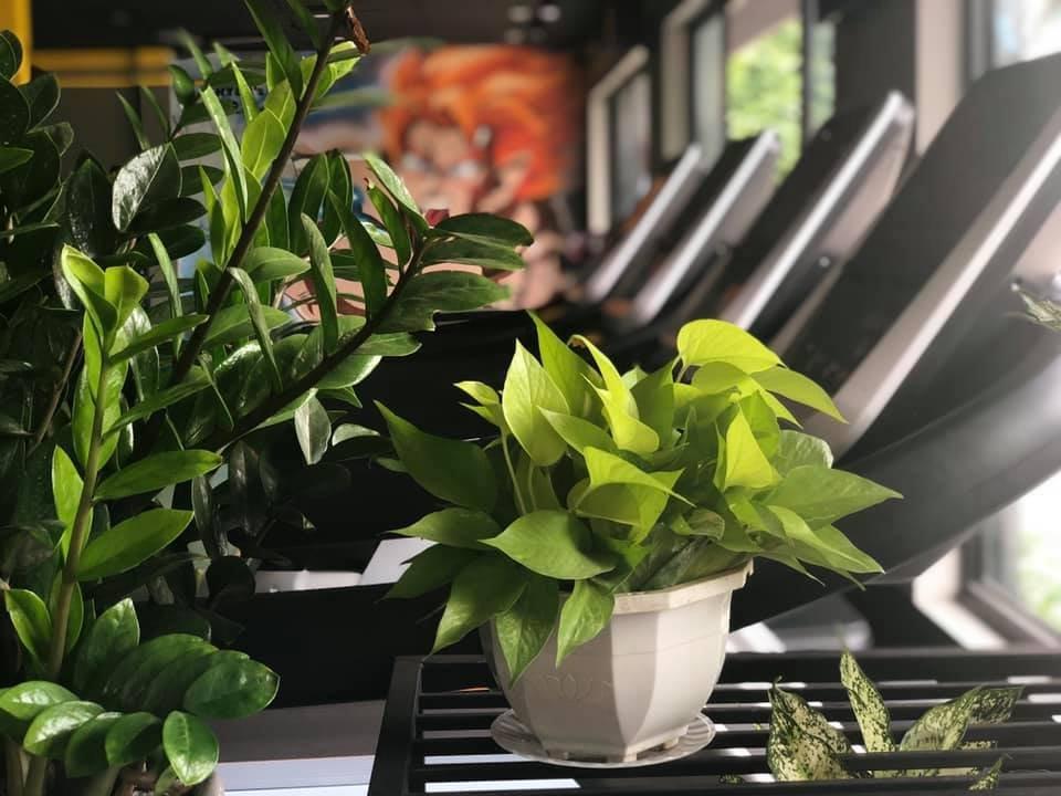 sử dụng cây xanh trong trang trí phòng tập gym